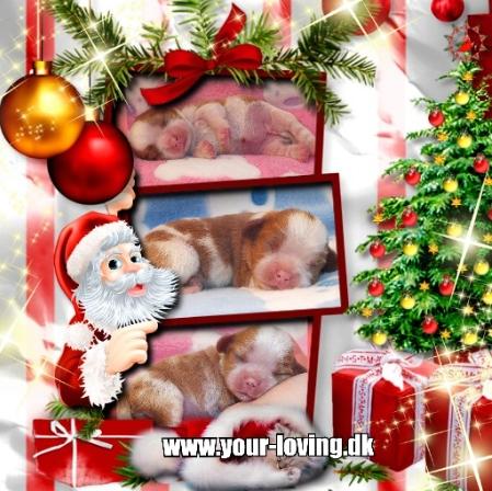 julekort-med-3