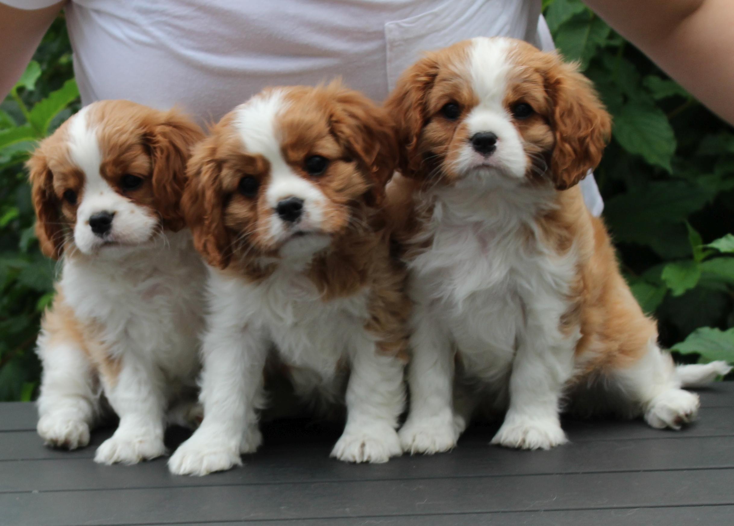 Eileen, Colin og Candy 8 uger